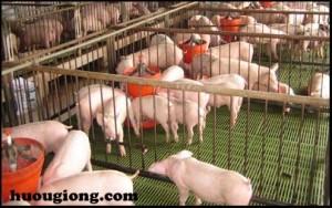 Hướng dẫn chăn nuôi gia súc