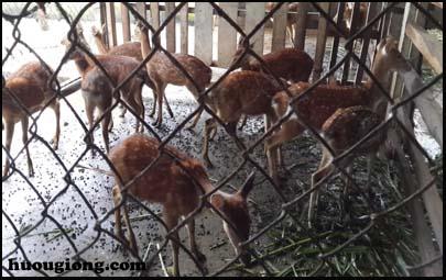 chuồng nuôi hươu