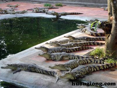 Trại cá sấu ở Đồng Nai